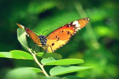 Una mariposa encaramada en las hojas hermosas Imágenes de archivo libres de regalías