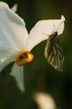 Una mariposa está en una flor imagen de archivo libre de regalías