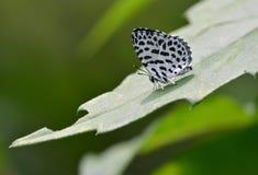 Una mariposa linda Fotografía de archivo libre de regalías