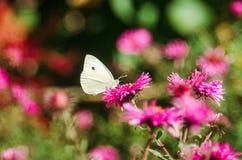 Una mariposa se sienta en una flor Fotos de archivo libres de regalías
