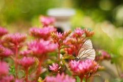Una mariposa se sienta en una flor brillante en tiempo soleado claro fotos de archivo libres de regalías