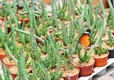 Una mariposa y un cactus hermosos Imagenes de archivo