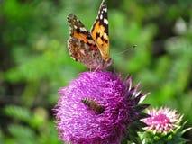 Una mariposa y una abeja en una flor Fotografía de archivo libre de regalías