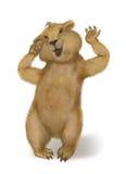 Una marmota despierta. Día de marmota Imágenes de archivo libres de regalías