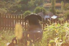 Una mattina di autunno di un cane Immagine Stock