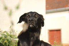 Una mattina di autunno di un cane Fotografie Stock Libere da Diritti