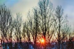 Una mattina meravigliosa di inverno nelle montagne Immagine Stock Libera da Diritti