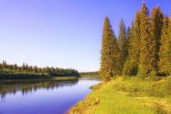 Una mattina soleggiata sulle banche di un fiume siberiano di taiga Fotografie Stock