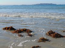 Una medusa corrió varado en la playa Con la marea imagenes de archivo