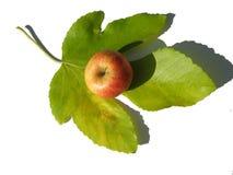 Una mela appetitosa Fotografia Stock Libera da Diritti