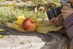 Una mela rossa matura che si trova su uno strato delle foglie di autunno mature Immagini Stock