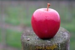 Una mela rossa semplice con fondo molle fotografie stock