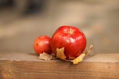 Una mela rossa si trova su una foglia gialla immagini stock libere da diritti