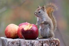 Una mela un il giorno… Immagine Stock Libera da Diritti