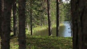 Una menzogne di legno della barca pacifica su un canale della regione di Spreewald con gli alberi verdi fertili, i cespugli e la  stock footage