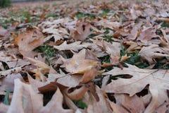 Una mezcla de fondo de la hoja del otoño en todas las hojas caidas Fotos de archivo libres de regalías