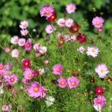 Una mezcla variada de flores rosadas Imágenes de archivo libres de regalías