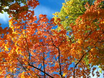 Una mirada en el cielo en bosque del otoño Imagen de archivo