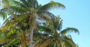 Una mirada en la palmera en el amanecer metrajes