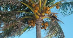 Una mirada en la palmera en el amanecer almacen de metraje de vídeo