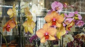 Una mirada a través de la ventana de la tienda en las orquídeas imagenes de archivo