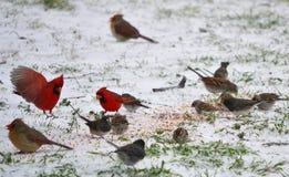 Una miscela degli uccelli Fotografia Stock