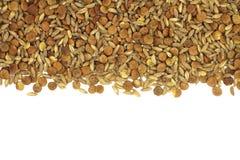 Una miscela dei cereali del grano e del fondo crudi del cereale Immagine Stock