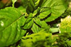 una miscela delle erbe Fotografia Stock Libera da Diritti