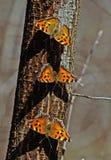 Una moltitudine di alveari delle farfalle. Fotografie Stock Libere da Diritti