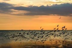 Una moltitudine di gabbiani in cielo Fotografia Stock Libera da Diritti