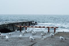 Una moltitudine di gabbiani sul Mar Nero Odessa Colpo del primo piano Immagini Stock