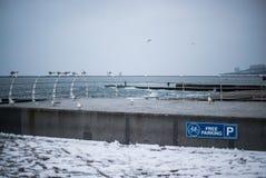 Una moltitudine di gabbiani sul Mar Nero Odessa Colpo del primo piano Fotografia Stock Libera da Diritti