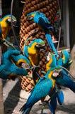 Una moltitudine di pappagalli Fotografia Stock Libera da Diritti