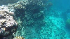 Una moltitudine di pesce nuota vicino alla scogliera archivi video