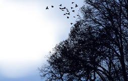 Una moltitudine di uccelli ha volato fuori dalle filiali Immagine Stock