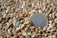 Una moneda euro entre granos del trigo Fotografía de archivo libre de regalías