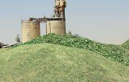 Una montaña de pequeños fragmentos del vidrio verde Fotografía de archivo libre de regalías
