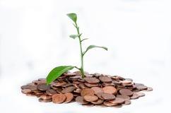 Una montagna di euro monete da cui una pianta si sviluppa ha isolato su un fondo bianco Fotografia Stock Libera da Diritti