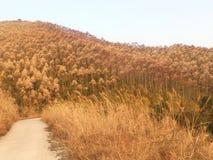 Una montagna in pieno di bella pianta e di speranza Fotografie Stock