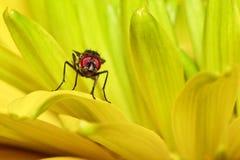 Una mosca Imagenes de archivo