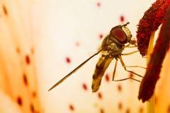 Una mosca Imagen de archivo libre de regalías
