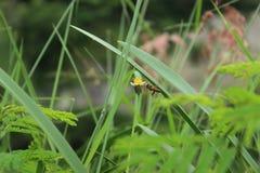 Una mosca de abeja en la flor alrededor del jardín verde Fotos de archivo libres de regalías