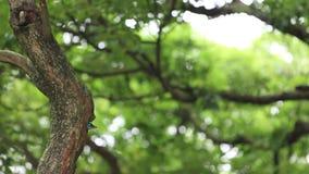 Una mosca del perro de aguas de Taiwán del pájaro de la jerarquía del agujero en el árbol en Daan Forest Park almacen de metraje de vídeo