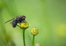 Una mosca en la flor Imagen de archivo libre de regalías