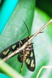 Una mosca hermosa Imagenes de archivo
