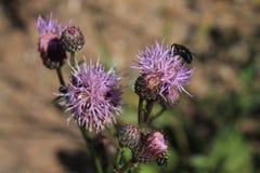 Una mosca si è seduta su un fiore immagini stock libere da diritti