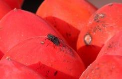 Una mosca si siede su frutta nel sole all'aperto Fotografia Stock