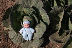 Una muñeca linda fue encontrada en el huerto de coles Fotos de archivo libres de regalías