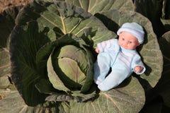 Una muñeca linda fue encontrada en el huerto de coles Imagen de archivo libre de regalías