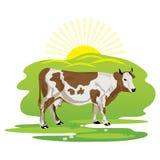 Una mucca che pasce in un prato Fotografia Stock Libera da Diritti